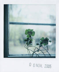 lucky window III by prismopola