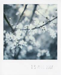 spring zero by prismopola