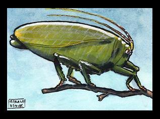 Katydid Sketchcard by geralddedios