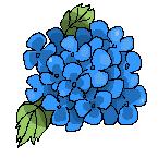 Icon Hortensia by hiromihana