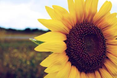 open up to the sun. by ilmari-nen