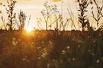 summer solstice. by ilmari-nen