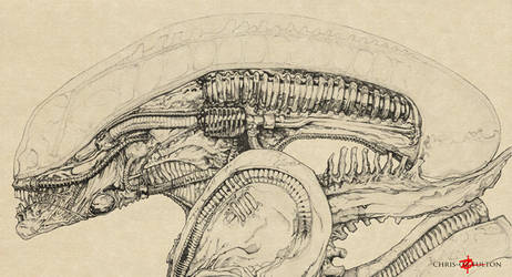 Xenomorph Alien Big Chap by ChrisOzFulton