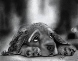 Cute Dog by Kim1486