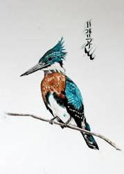 Amazon Kingfisher by Boio8010