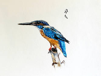 Blue Kingfisher by Boio8010