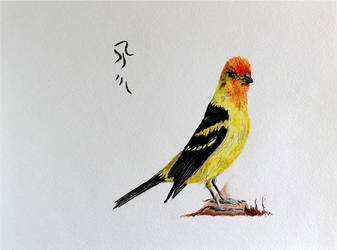 Western Tanager by Boio8010