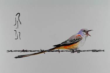 Scissor-tailed Flycatcher by Boio8010