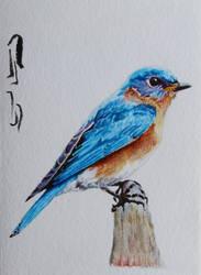 Eastern Bluebird by Boio8010