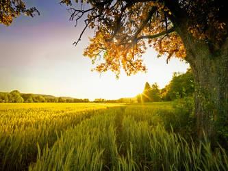 Field by jendrynDV