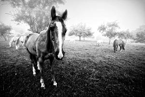 Horses by jendrynDV