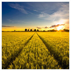 Harvest by jendrynDV