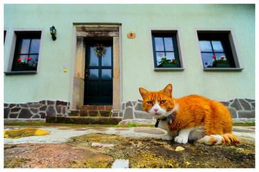 Cat... by jendrynDV