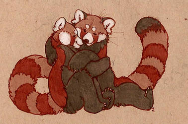 more red pandas by luve