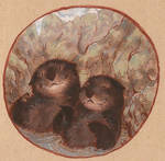 two otters by luve