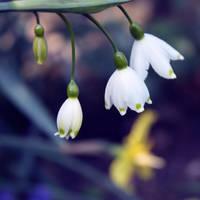 White spring by Pamba