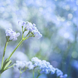 Tiny little flowers by Pamba