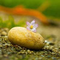 Stones by Pamba