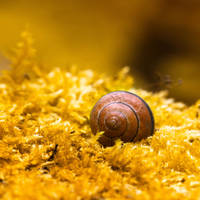 House of snail by Pamba