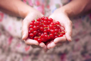 Delicious red berries by Pamba