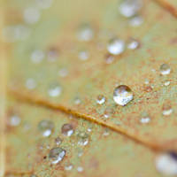Autumn dew by Pamba