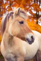 Autumn Horse by Pamba