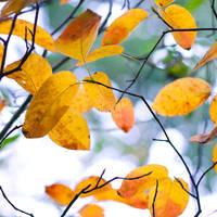 Sweet autumn by Pamba