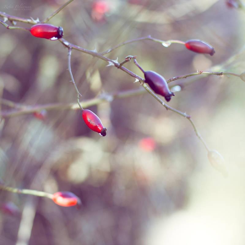 Whispering autumn by Pamba