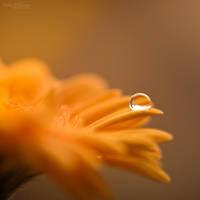 Orange by Pamba