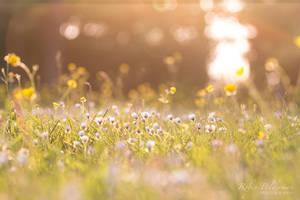 Glowing flowers by Pamba