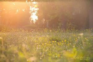 Warm summer evening by Pamba