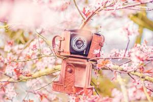 Photography season by Pamba
