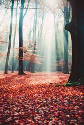 Magical light by Pamba