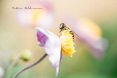 Summer insects by Pamba