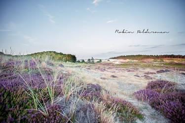 Dutch nature by Pamba