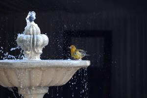 Splish splash I was taking a bath... by MaresaSinclair