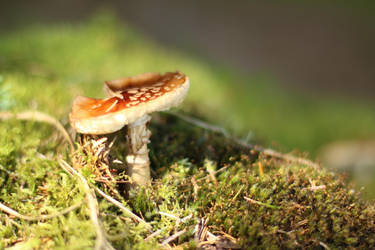 Red Mushroom by MaresaSinclair