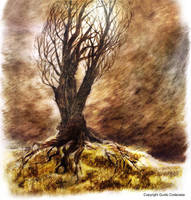 Old Tree in Grey Storm by DreamMaze