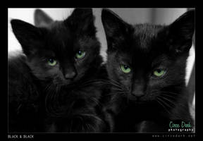 Black and Black by circedark
