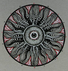 mandragora sun by jeremyfamir