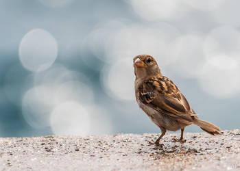 Bokeh bird by Yupa