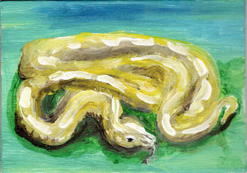 Albino Constrictor by Vryka