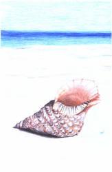 Hornshell by Vryka