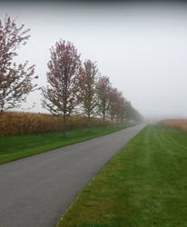Foggy Farm Road by ice-queen-blue