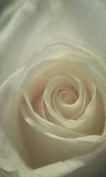 Blooming Rose by AceVolita