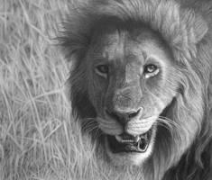 Lion in the Maasai Mara by StephenAinsworth