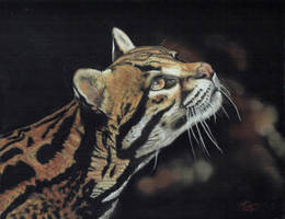 clouded leopard by wildlifeartbykaz