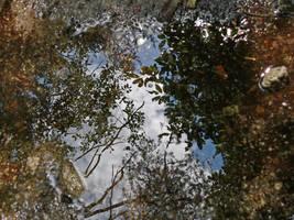 Reflection by Izo-Marcel