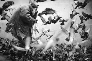 Pigeon man 1 by sican