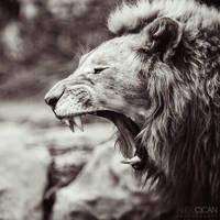 Portrait of a lion by sican